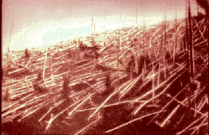 Trees felled by the Tunguska blast. Photograph from Kulik's  expedition.